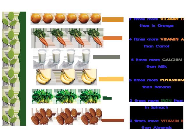 Moringa_Nutritions