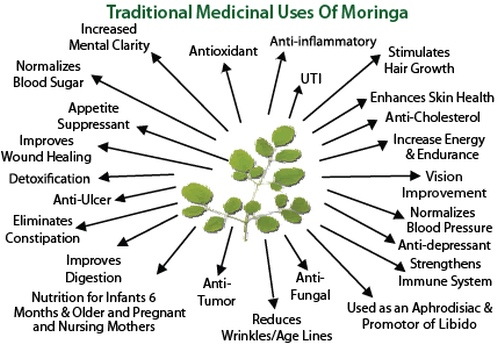 moringa-natural-products-traditional-medicinal-uses-498x345