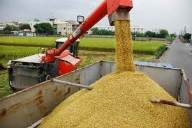 rice processing