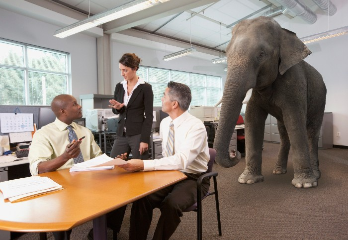 Business people having meeting with elephant in the room