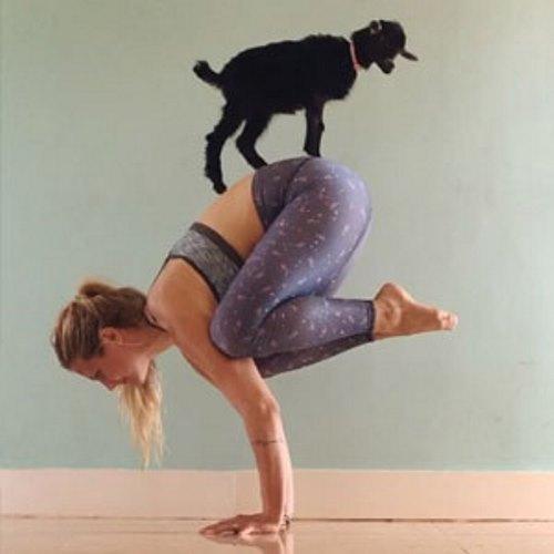 yoga-goat-penny-rachel-brathen-thumb