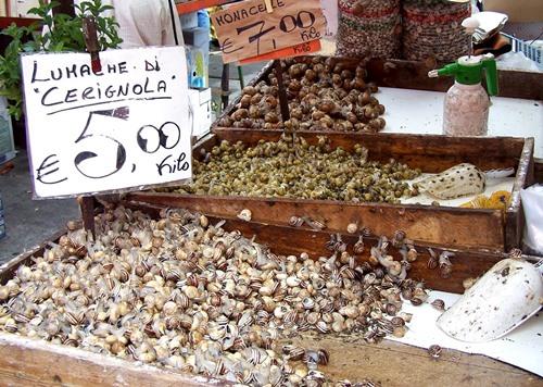 Snails-Italy
