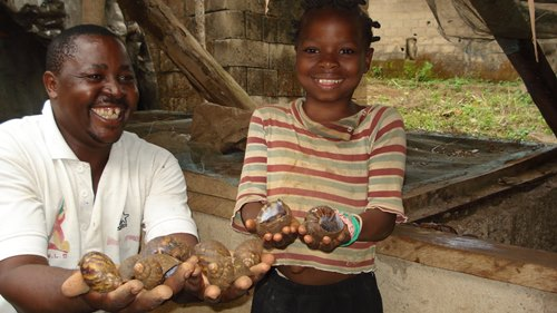 Snails-farming-Africa