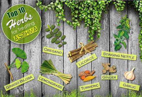 herbs-for-asthma