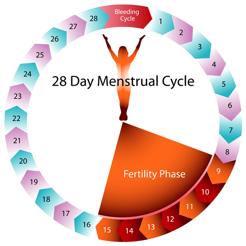 menstrual_cycle_fertility_chart2.jpg__2493x2493_q85_crop_upscale