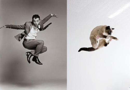 Cats-Recreate-Awkward-Model-Poses-4