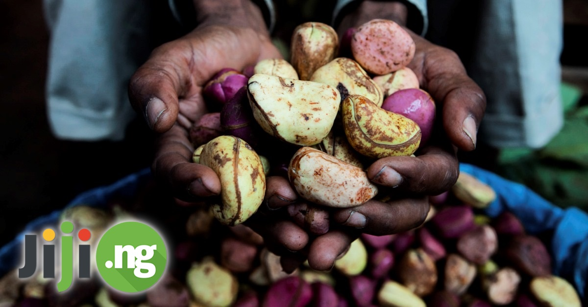 30 Health Benefits Of Bitter Kola – And Even More!   Jiji Blog