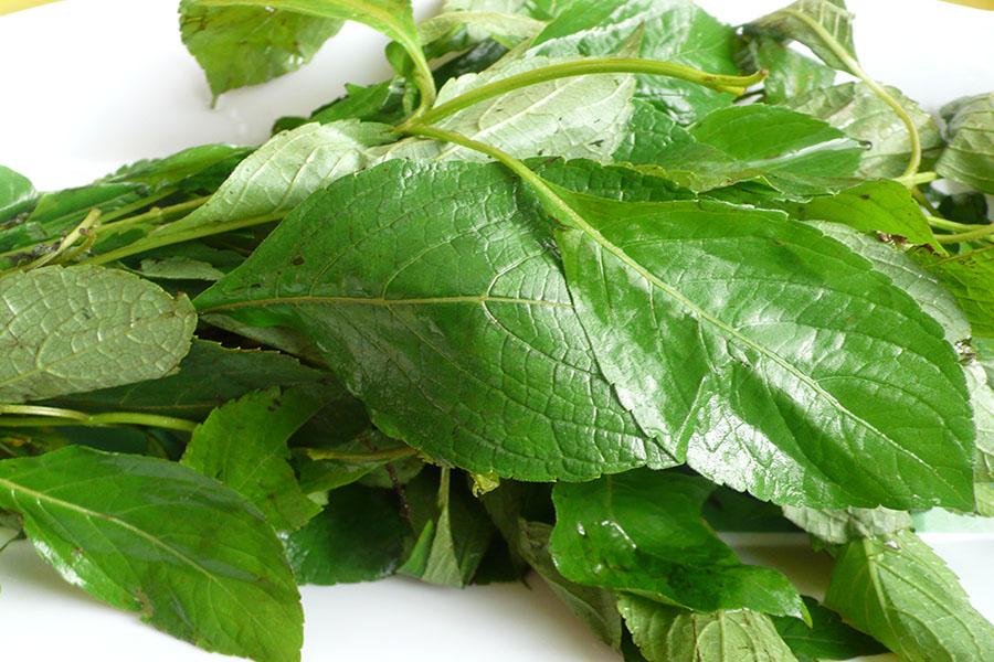 Yoruba Herbs For Fertility: Top Helpful Remedies | Jiji Blog