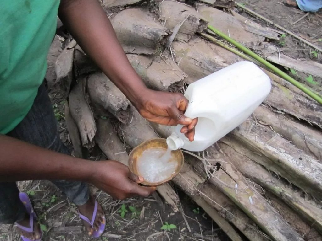What is palm wine