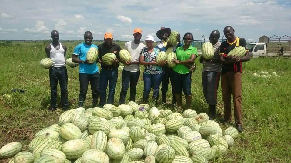 How to grow watermelon in Nigeria