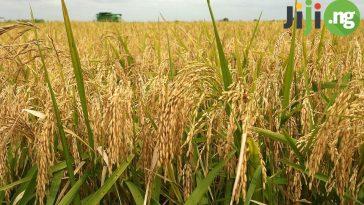 farming in Nigeria