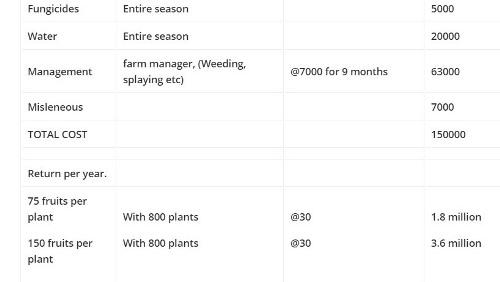 papaya business plan