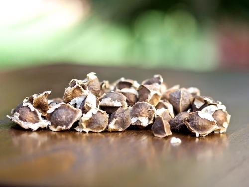 benefits of moringa seeds