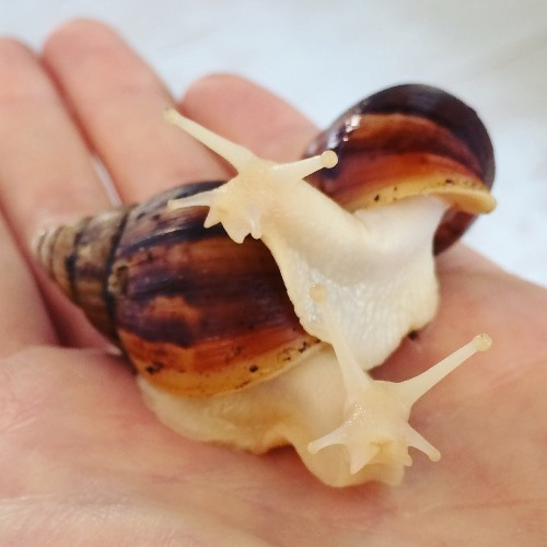 how to start a snail farming business