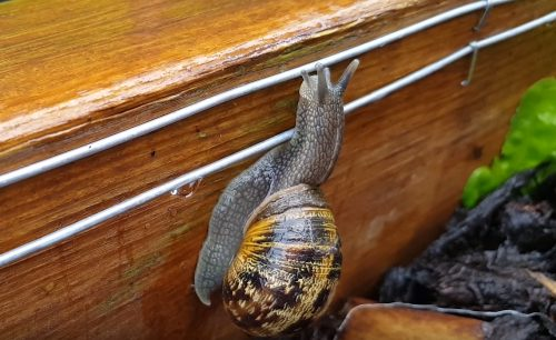 How to take care of snails