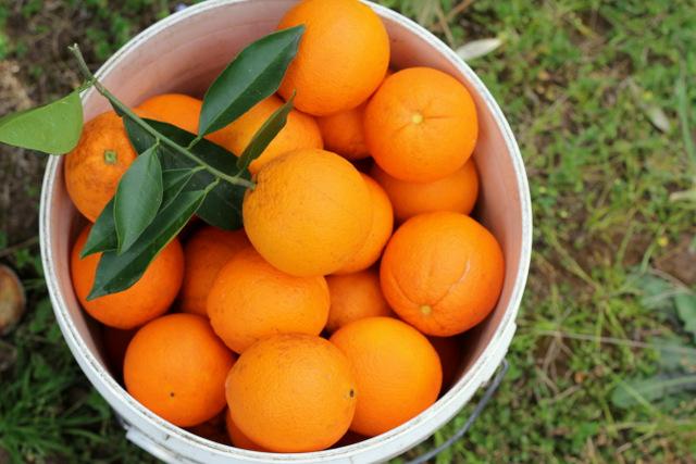 How lucrative is orange farming in Nigeria?