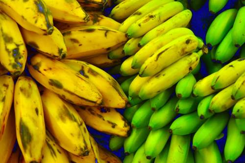is plantain a vegetable