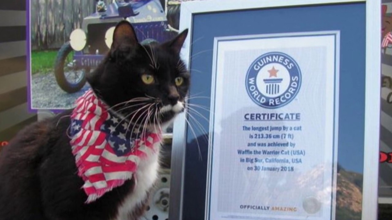 See The Weirdest World Records Ever In The World Guinness ...